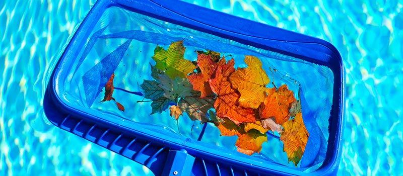 pool skimmer collecting leaves from pool